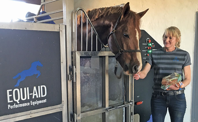 Equine hydrotherapy for leg injuries